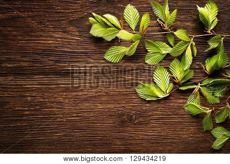 Green tree leaves on wooden background close up.