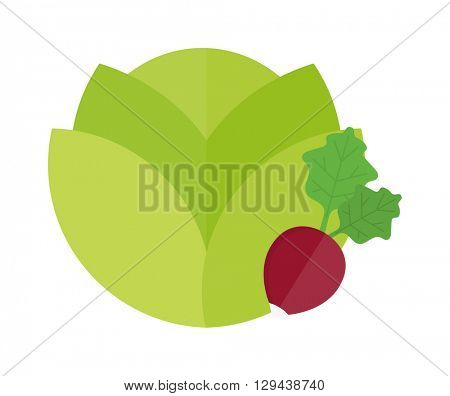 Green cabbage and red radish vegetable vegetarian fresh salad food vector illustration