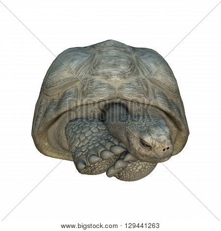 3D Rendering Turtle Galapagos Tortoise On White