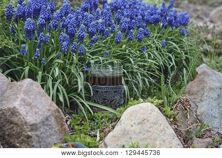 grape hyacinth and glass holder with glass of tea horizontal