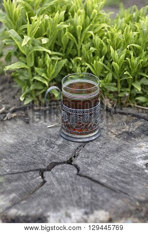 phlox and glass holder with glass of tea