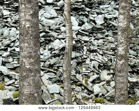 Scree from old slate quarry and trees uk