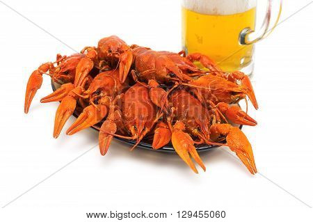 Boiled crawfish on a plate on a white background. horizontal photo.