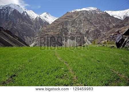 Himalayan oasis - Ladakh, Jammu & Kashmir, India