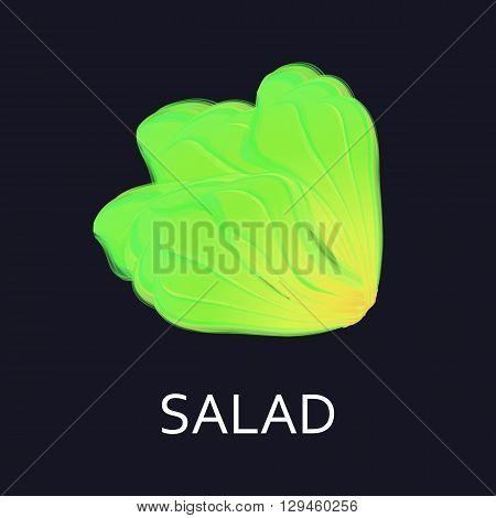 Salad Lettuce. Lettuce vector illustration. Lettuce eat.