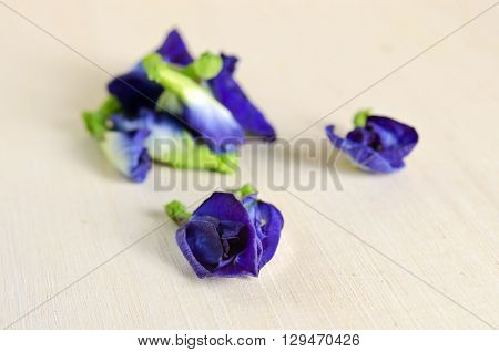 Butterfly pea or Blue pea flowers (Science name Clitoria ternatea L. other names are Orchid Station Orchid travel)