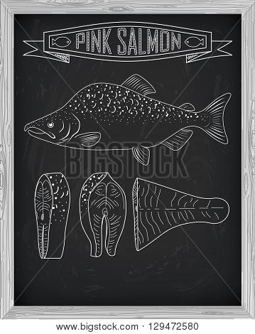 Beautiful Fresh Salmon Closeup Side View Drawn With Chalk. Pink Salmon Cutting Scheme Black And Whit