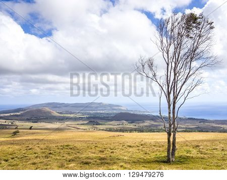 Easter Island Trees
