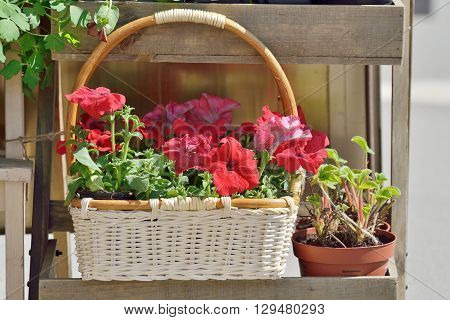 In the basket are beautifulheat-loving flowers called petunias.