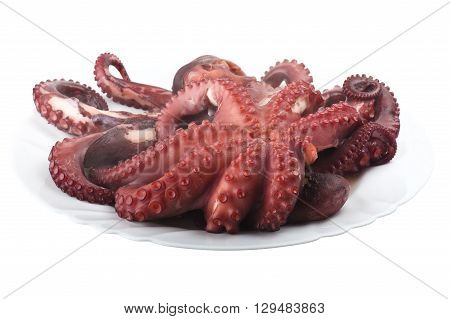 two boiled octopus on a white plate