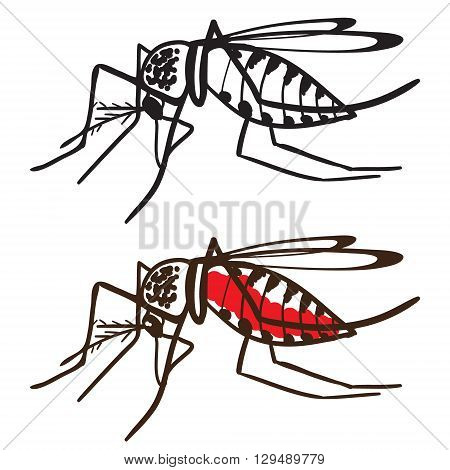 Insect Mosquito Aedes aegypti. The Zika virus carrier. Mosquito isolated on white background. Ideal for informational and institutional sanitation and related care.