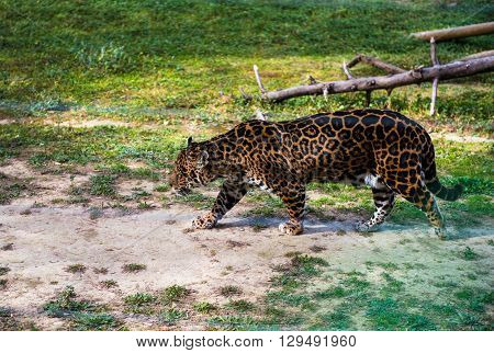Jaguar Outdoors