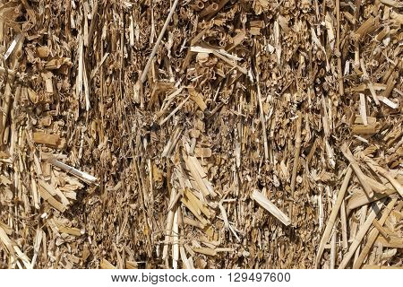 Texture of dry straw in the bale. background. close-up