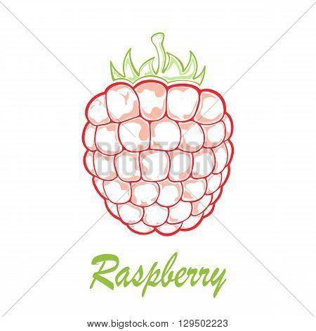 Ripe raspberry icon isolated on white background, illustration.