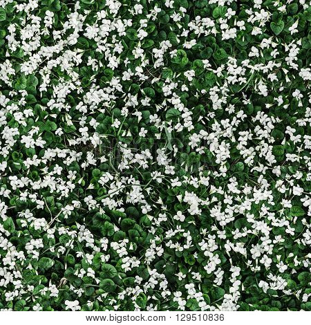 Seamless repeating pattern with small white flowers