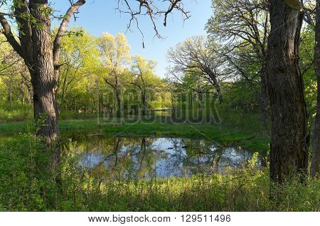 battle creek regional park of saint paul minnesota along trail and pond through forest during fresh greenery of spring