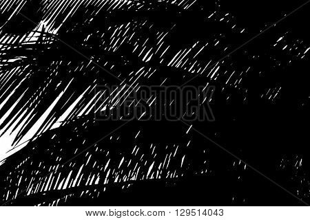 Silouette of beautiful palms leaves, close up