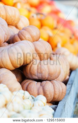 close-up of huge pile of different pumpkins at pumpkin patch