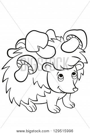 Coloring pages. Little cute kind hedgehog has the mushrooms on the needles. The hedgehog smiles.