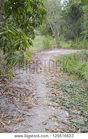 walkway nature in nature country Nakhon nayok , Thailand
