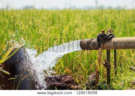 Water Flow From Large Pump Tube In Rice Field In Central Of Thailand