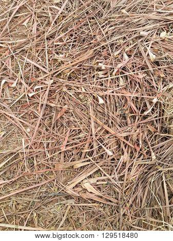 close up dry lemongrass on the ground