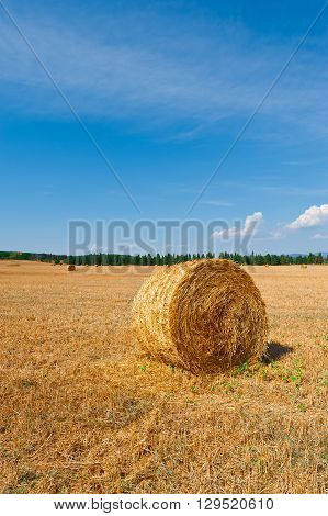 Tuscany Landscape with Many Hay Bales on the Background of Forest in Italy