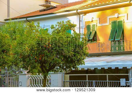 Orange tree near the modern house on the street of Italian city.