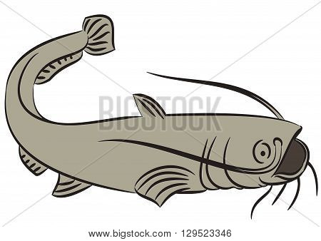 Line drawing of a catfish on a white background