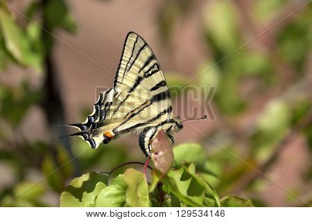 Colorful butterfly sitting alone on a branch