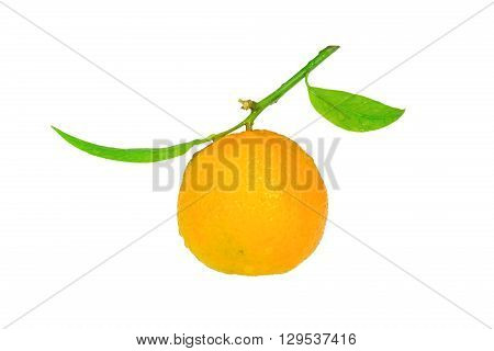 Clementine with a green leaf isolated on white