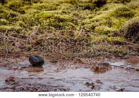 Lava Rock In A Stream