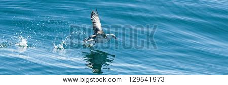 Seagull Trying To Catch A Fish