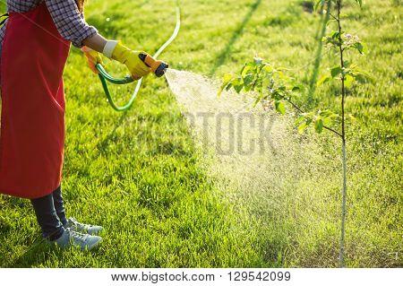Woman gardener in uniform watering tree with garden hose