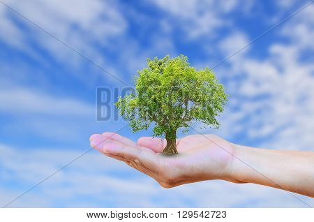 Hands holding tree with burred blue sky background. Ecology concept. World Environment Earth Day Organ Donation Creation Holy Bible concept