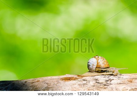 Snail In A Forest At Springtime
