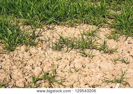 Green Plants In Dry Soil