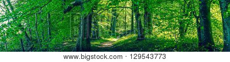 Forrest Foliage With Green Trees