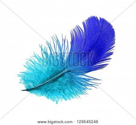 Feather of the blue bird steaming midair