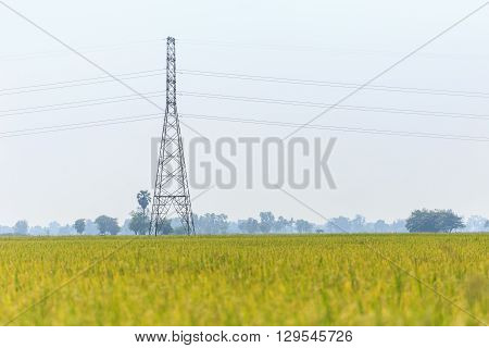 High voltage electric pole in rice field Thailand