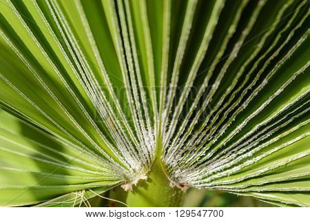 Green leaf of palm tree on blue sky background
