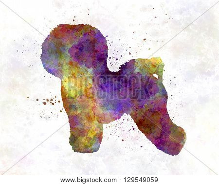 Bichon Frise dog in artistic abstract watercolor background