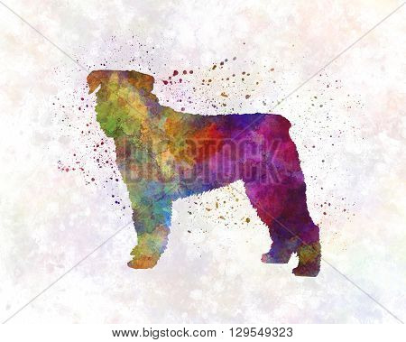 Bouvier Des Flandes dog in artistic abstract watercolor background