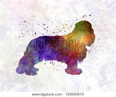 Cavalier King Charles Spaniel dog in artistic abstract watercolor background