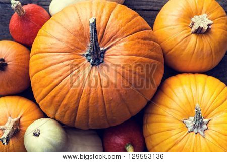 Flat lay lots of different sorts of orange and yellow Pumpkins