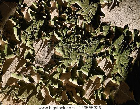 Flaked green paint on the sunlit plastered wall