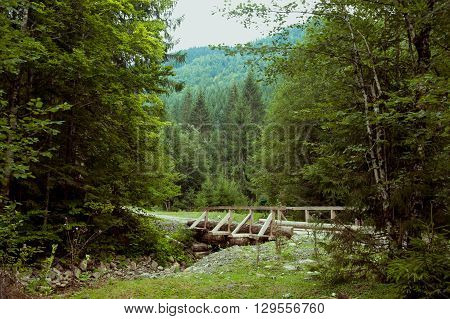 Picture of bridge in a beatiful green forest