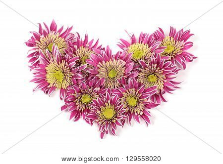 Bouquet of chrysanthemums in the form of a heart isolated on white background