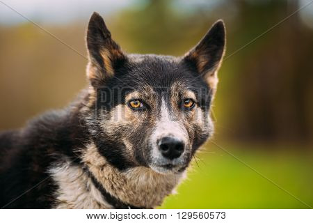 Close Up Portrait Of Medium Size Mixed Breed Dog
