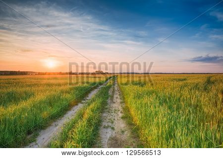 Rural Countryside Road Through Green Wheat Field. Spring Agricultural Season. Colorful Dramatic Sky At Sunset Sunrise With Sun